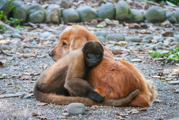 Wild couple of dog and monkey