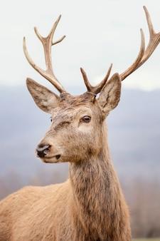 Дикий олень пойман в лесу