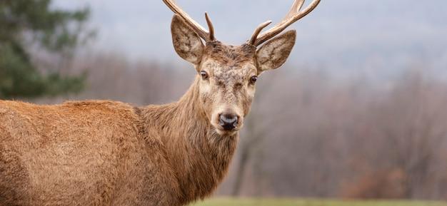 森に捕らえられた野生の鹿