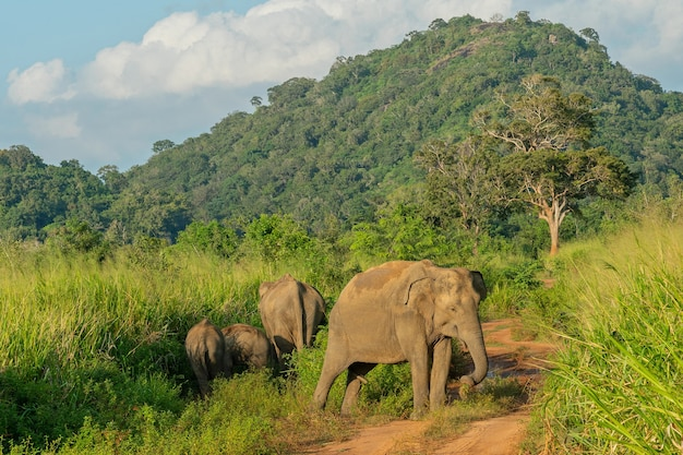 정글에서 야생 코끼리 동물