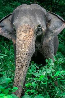 美しい森の中の野生の象