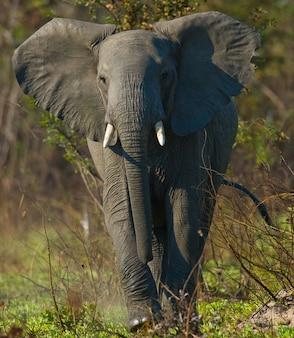 野生の象が茂みの中に立っています