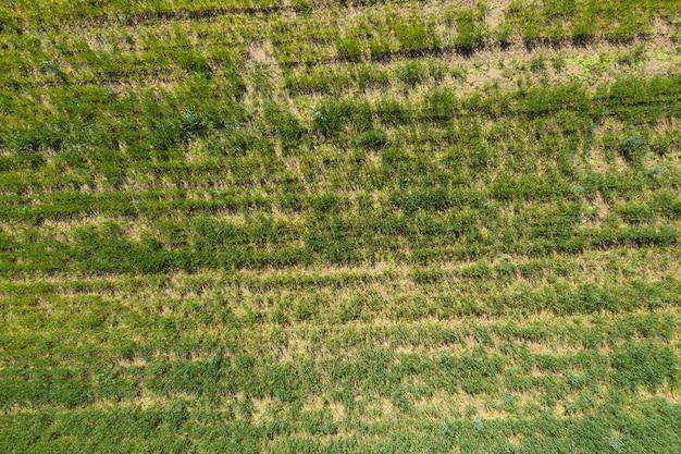 여름 배경 무인 항공기 촬영 위에서 야생 필드보기