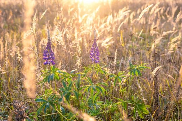 Wild flower on autumn meadow