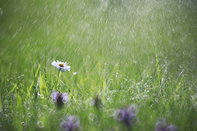 야생 꽃입니다. 녹색 초원 봄에 작은 꽃.
