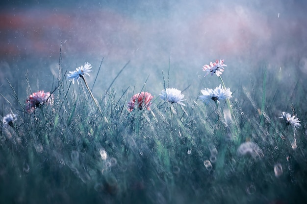 野生の花。緑の牧草地の春に小さな花。