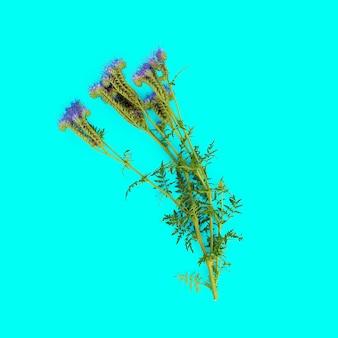 青い背景の上の野生の花。ミニマルスタイル