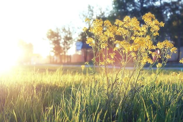 봄 저녁 일몰 시간에 녹색 초원에 야생 꽃