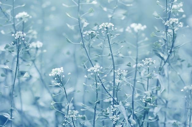 Фон полевые цветы в зимних тонах