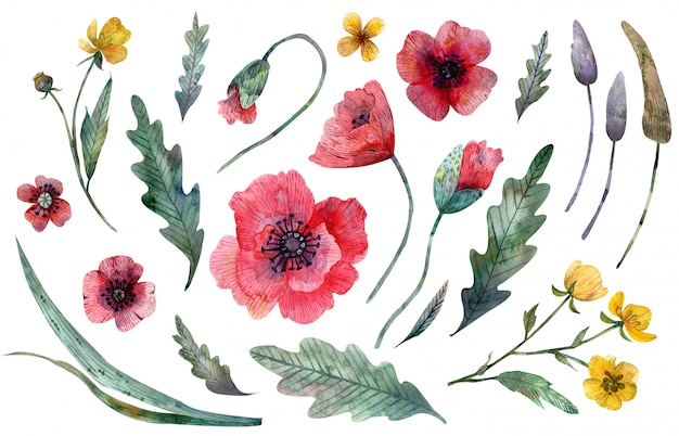 Wild flowers clipart isolated on white