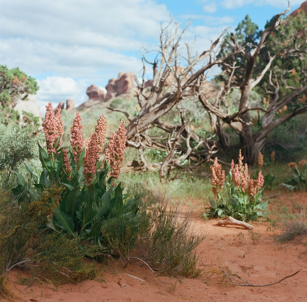 Fiori selvatici e piante secche che crescono in una zona deserta
