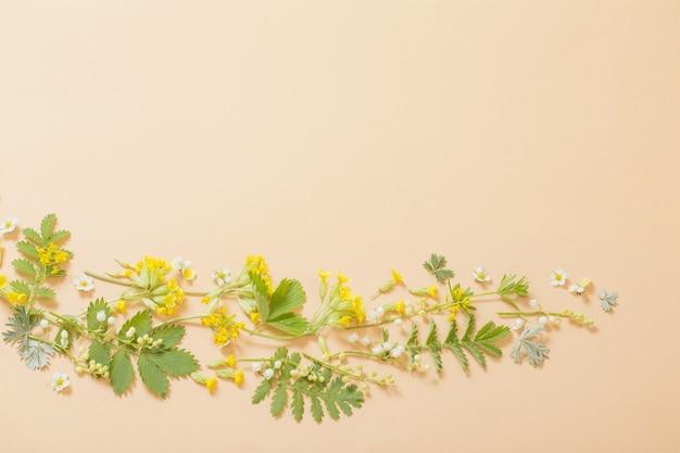 紙の背景に野生の花