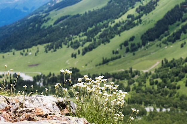 산과 푸른 하늘을 배경으로 하는 야생화