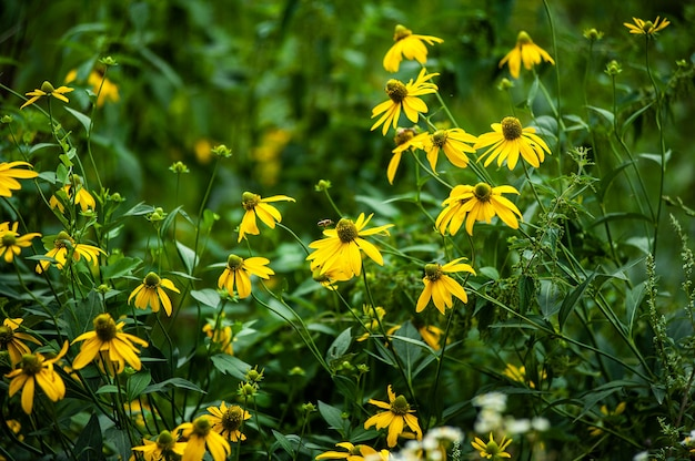 Wild flowers on the summer field