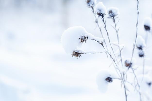 Полевые цветы с инеем. зимняя сцена. зимний фон природы. зимний пейзаж.