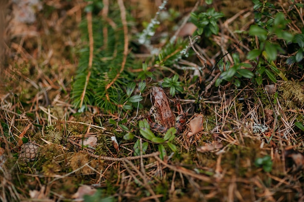 Wild forest flora and fauna. green plants and brown frog in the woods.