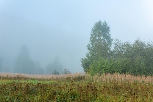 朝の霞の秋の草と野生の森の空き地
