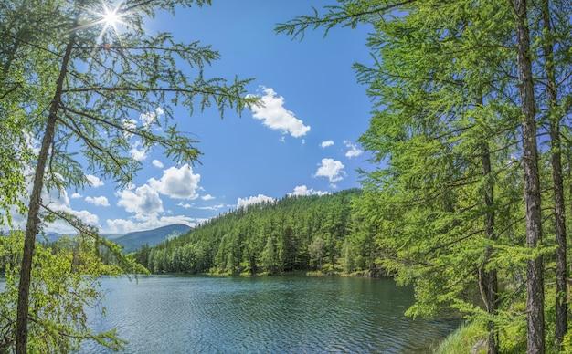 夏の日の野生の森の湖