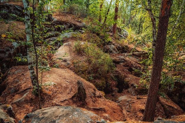 Дикий лес с огромными камнями, покрытыми мхом, мистический природный ландшафт северной природы.