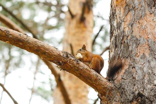 나무 위의 다람쥐가 먹는 야생 생강 동물
