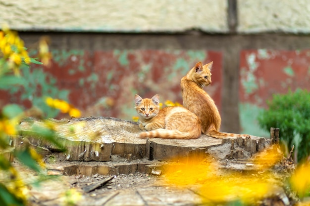 Wild ginger kittens are resting in a tree garden