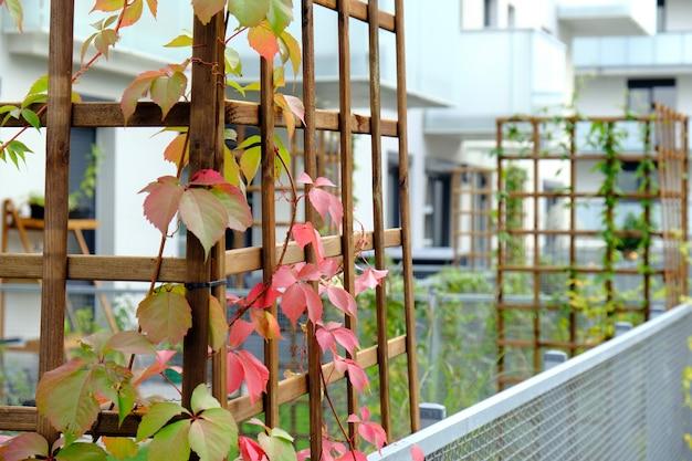 Дикий виноград растет в уютном дворе современного многоквартирного дома.