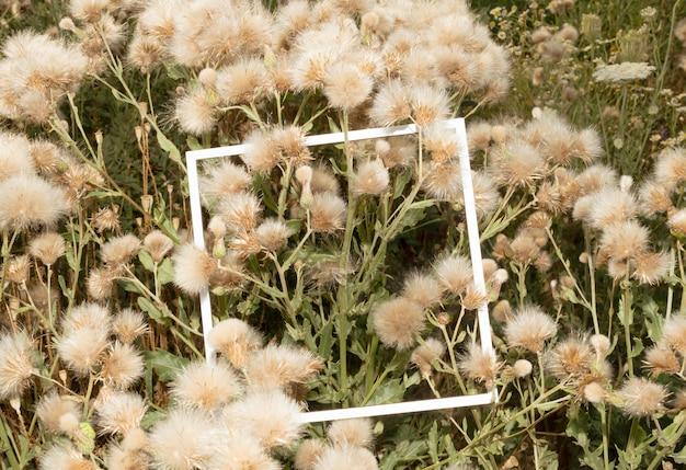 白いフレームの立方体で芝生に野草が咲きました。雑草の概念