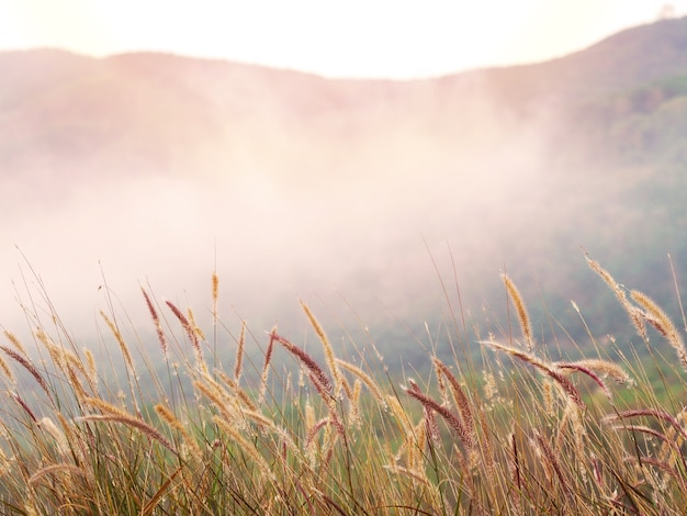 朝は野草の花畑と霧。黄金の日の出または日没時間の背景。