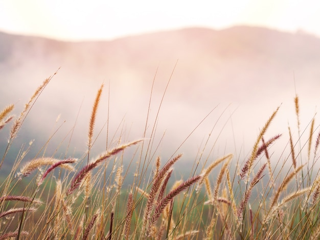 Wild grass flower fields and fog in the morning. golden sunrise or sunset time background.