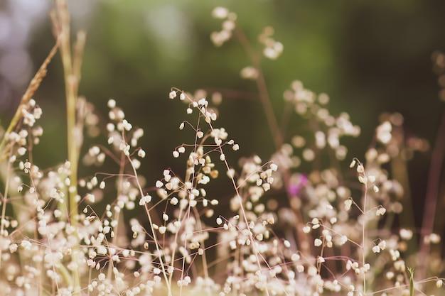 Дикая трава на летнем лугу.
