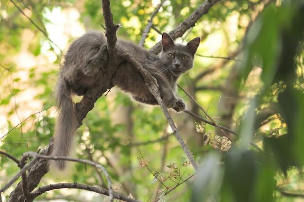 나무 위의 야생 회색 고양이가 새를 잡는다