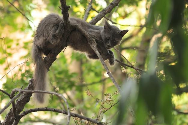木の上の野生の灰色の猫が鳥を捕まえる