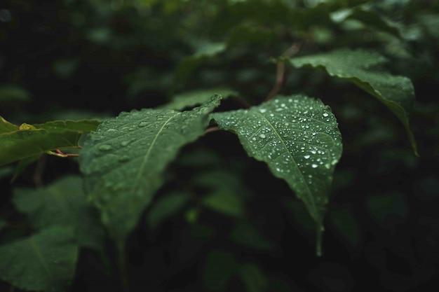 Foglie verdi selvagge con rugiada su di loro