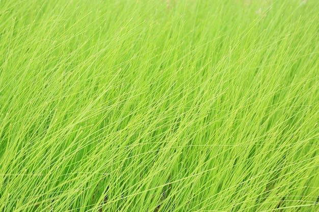 배경으로 야생 녹색 키가 큰 잔디. 아름다운 자연 패턴