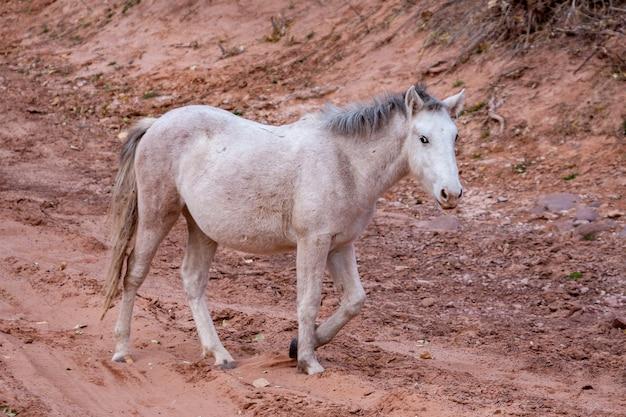Дикая лошадь каньон де шелли