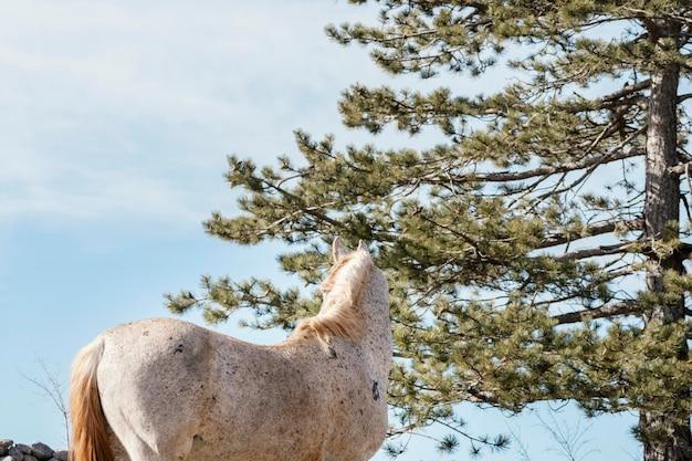 屋外の森の野生の馬