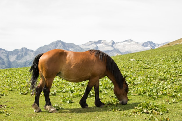 A wild horse in the mountains grazing alone