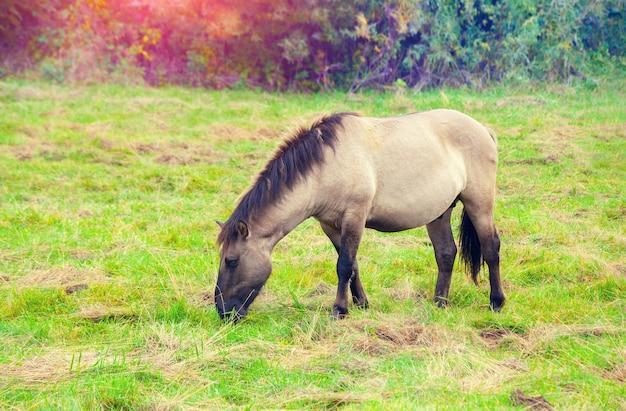 牧草地の野生の馬