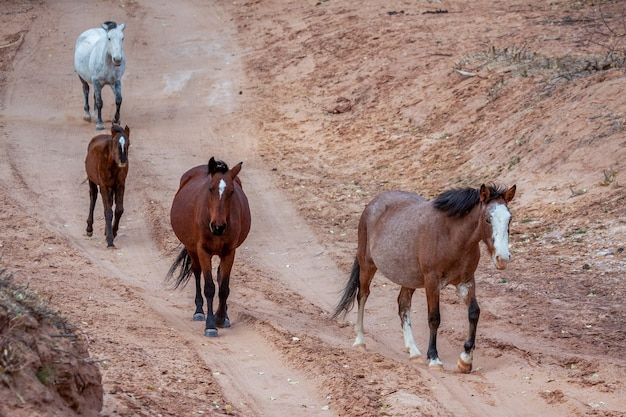 Дикие лошади каньон де шелли