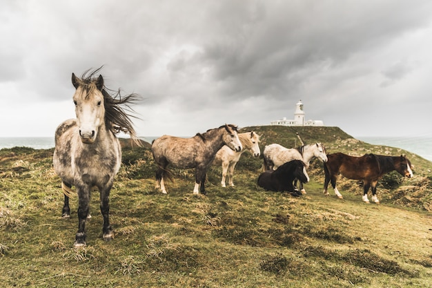Wild horses in the countryside on a stormy day