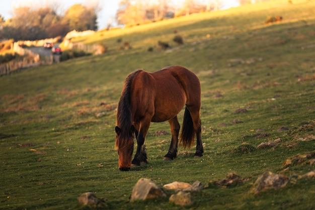 バスク地方のハイスキベル山で草を食べる野生の馬。