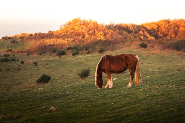 Wild horses eating grass at mount jaizkibel, basque country.