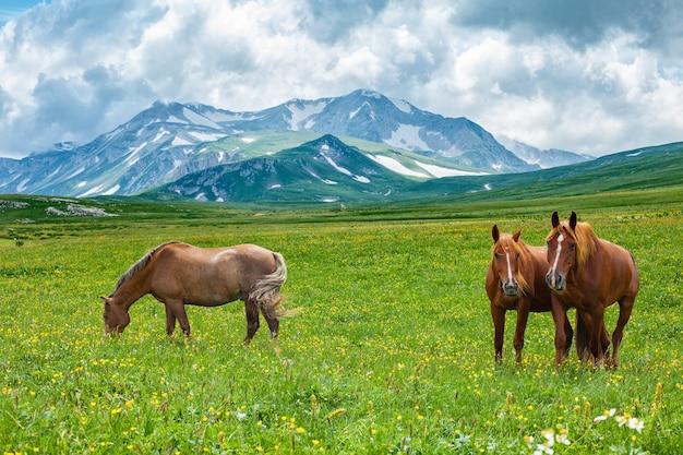 山の谷、ラガナキ、ロシアで放牧している野生の馬