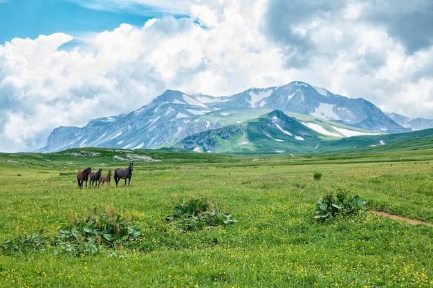 Дикие лошади, пасущиеся в горной долине