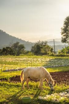 牧草地の野生の馬。