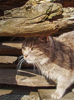 Wild  kitten outdoor. dirty street cat  walk in the streets.  lonely homeless cat. street cat in the sunny day.  homeless cat on the city street.