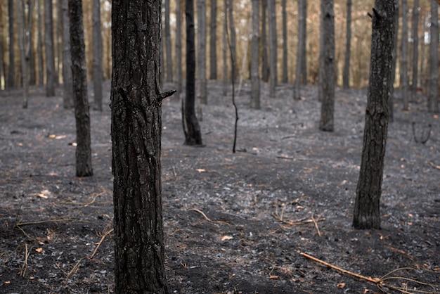 炎で完全に破壊された公園の野生生物