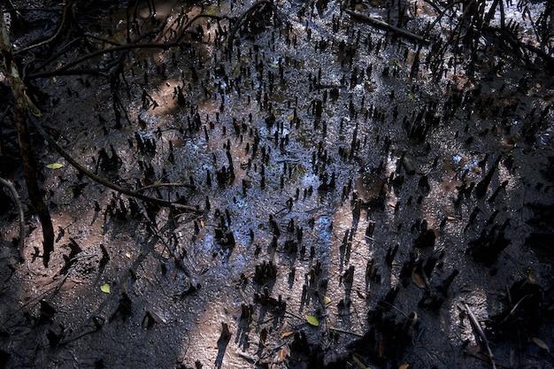 Wild mangrove forest. mangrove trees close up