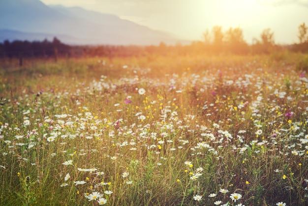 日没時の山の野生の牧草地。美しい自然の背景。