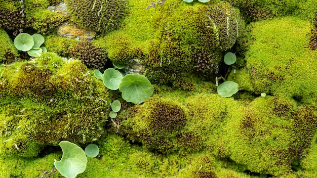 Wild moss with small plants and rock